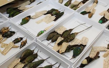 Museu de Zoologia da USP abriga um dos maiores acervos da América Latina