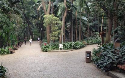 Parque Trianon: refúgio em plena Avenida Paulista