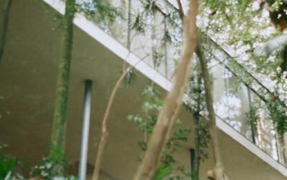 Casa de Vidro: a primeira obra construída de Lina Bo Bardi
