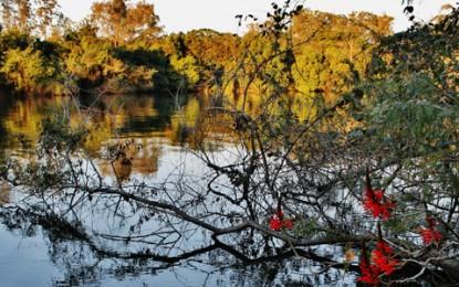 Parque Ecológico do Tietê abriga 190 espécies de aves