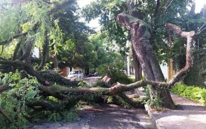 Chuva em São Paulo derruba 264 árvores