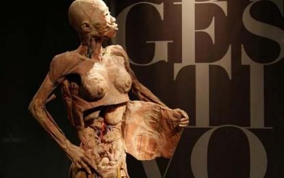 Mostra O Fantástico Corpo Humano