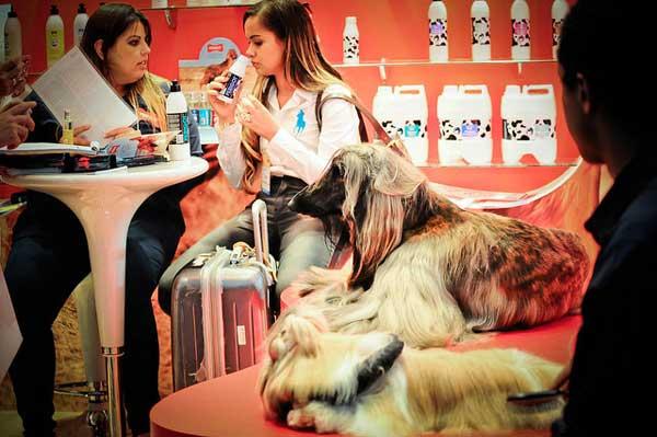 novidades para cachorros e gatos na pet south fair