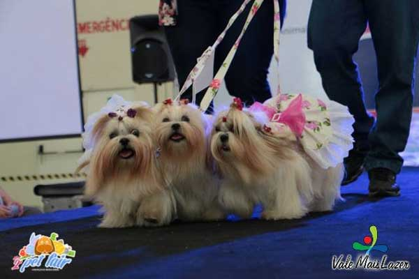 cachorros na passarela do pet fair são josé dos campos