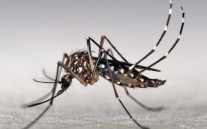 Casos de dengue em São Paulo diminuem cerca de 80%