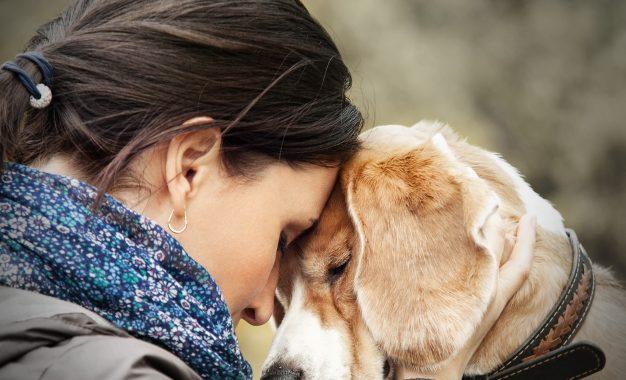 Babá para pets: serviço é ótima opção para os cuidados dos bichinhos